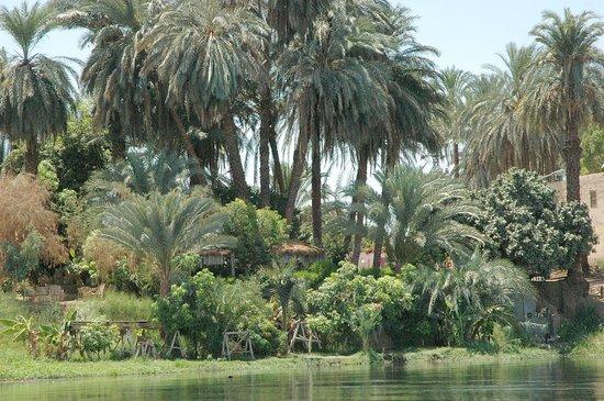 Luxor, Egypt: riverbank