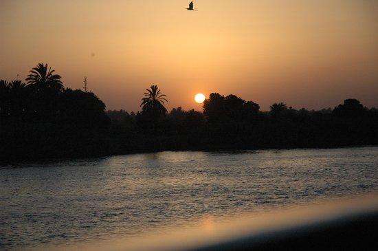 Luxor, Ägypten: bird at sunset