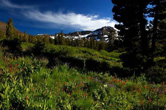 Tahoe Photographic Tours: wild flowers