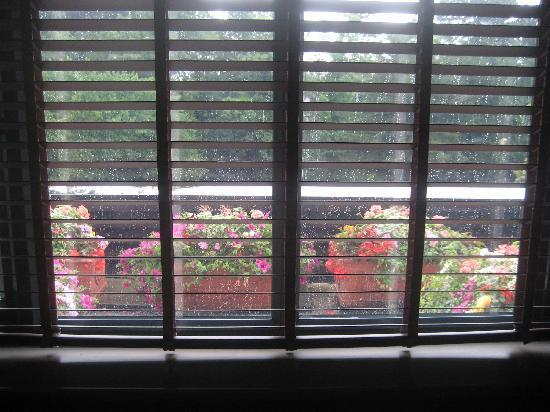 Cheadle, UK: window view
