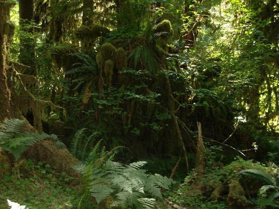 Forks, WA: Hoh Rainforest