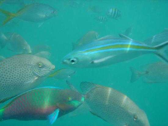 Tioman Paya Resort: Snorkelling 2