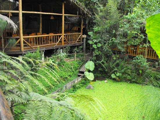 Mindo Lago: vista del restaurant