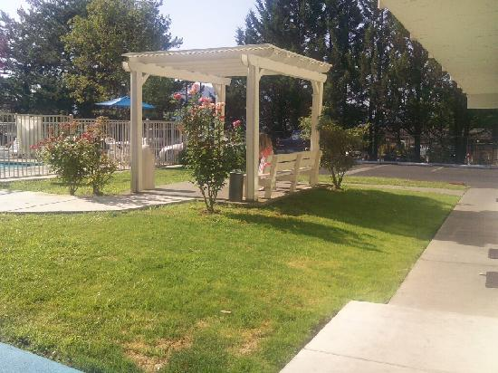 Motel 6 Grants Pass: This is the pergola near the pool where my girls ate breakfast among the rosebushes