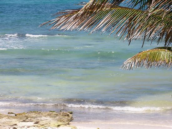 Caribbean Reef Villas : ocean