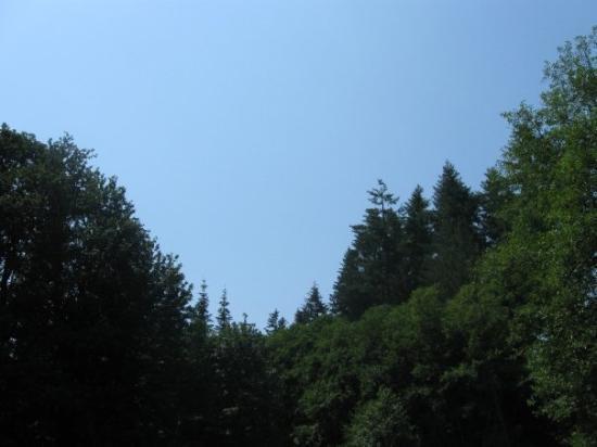 Timber Foto