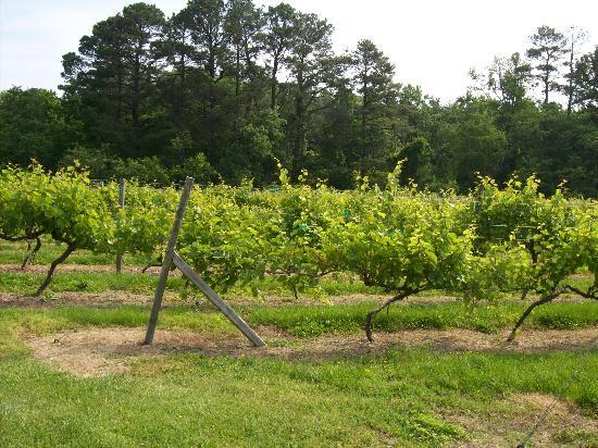 St. Michael's Manor: The Vineyard