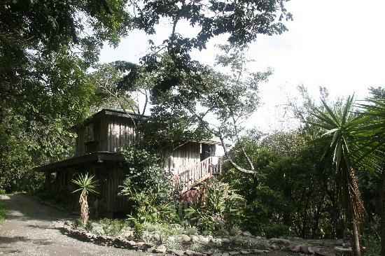 TreeTop House: Here is the house - we stayed on the upper level