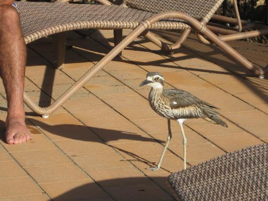 Djarawong Lodge B&B: this little bird visists the owners