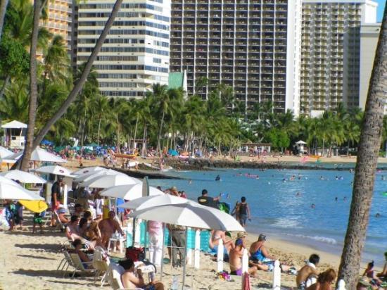 Car Hire Honolulu Tripadvisor
