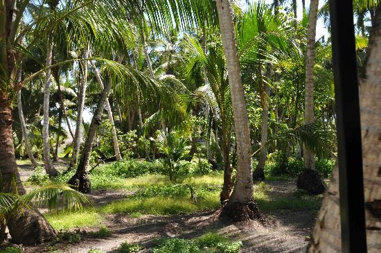 Shangri-La's Villingili Resort and Spa Maldives: Coconut Forest