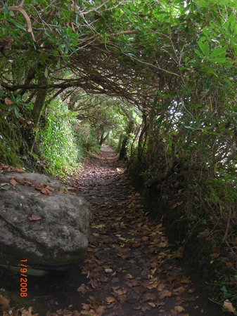 Glanleam House : Magic pathway