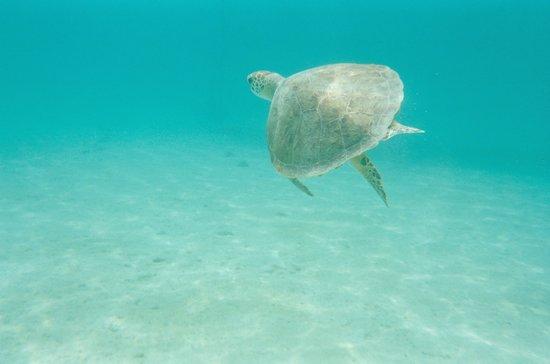 St.Thomas Scuba and Snorkel Adventures: The sea turtle
