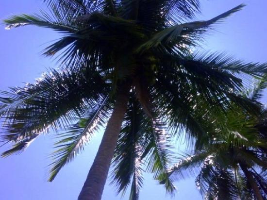 Playa Las Animas ภาพถ่าย
