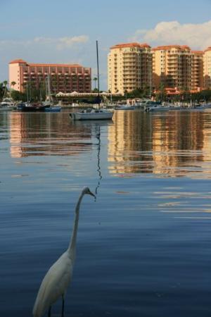 The Pier Aquarium: St. Petersburg, FL