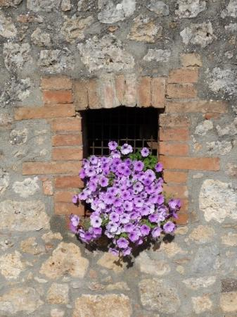 Antico Borgo Poggiarello: Flowers at our B&B