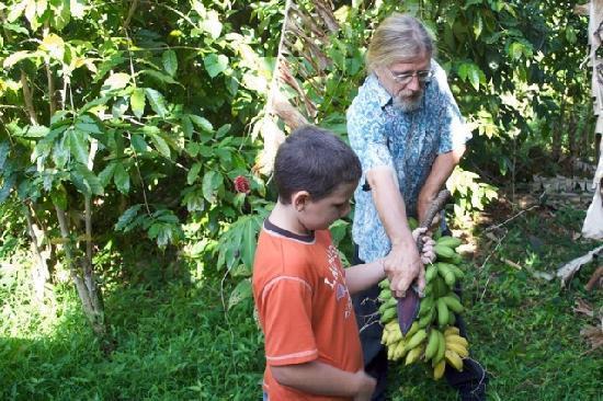 "Pomaika'i ""Lucky"" Farm B&B: John Paul cutting fresh bananas."