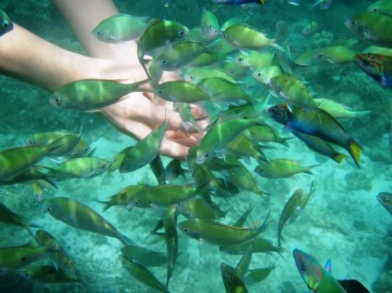 Crocodile Island : thanks to my underwater cam...
