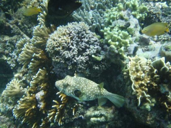 Crocodile Island : underwater beauty