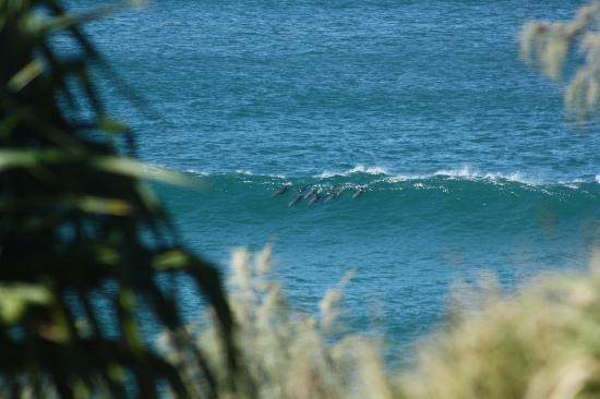 North Stradbroke Island Australia: Dolphins North Gorge Point Lookout