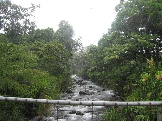 Arenal Observatory Lodge & Spa: From the swinging bridge