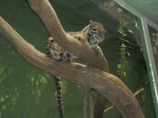 Prague Zoo ภาพถ่าย