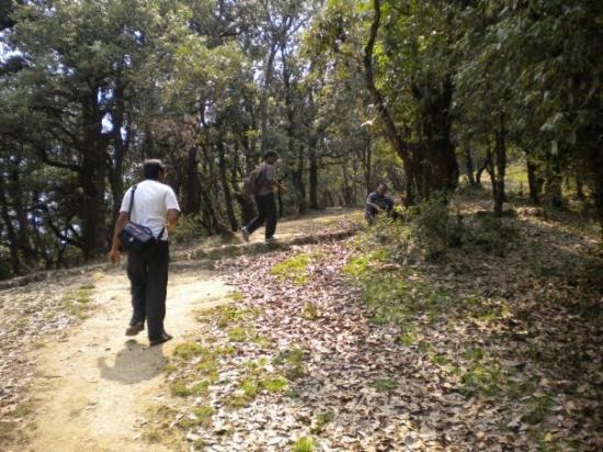 Pithoragarh, India: Way to Musk Deer Park, Chaukori