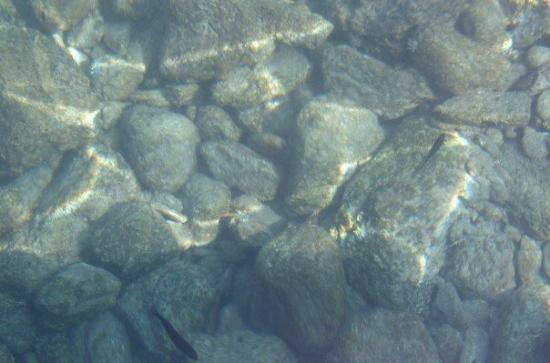 أولودينيز صورة فوتوغرافية