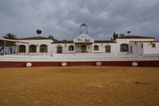 Hotel El Pilar: Les arenes de l'Hotel.