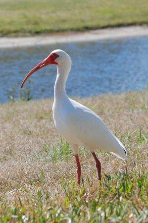 Bird - Kissimmee, FL