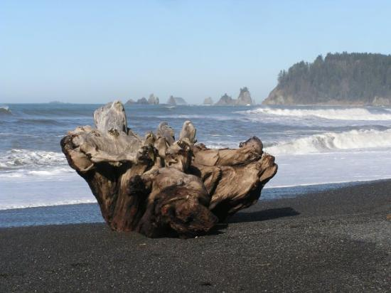 La Push Beach All You Need To Know Before You Go With Photos Tripadvisor