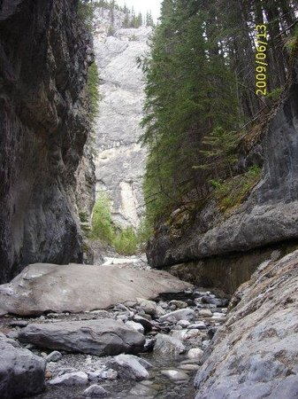 Fossil In The Rocks Picture Of Kananaskis Country Canadian Rockies Tripadvisor