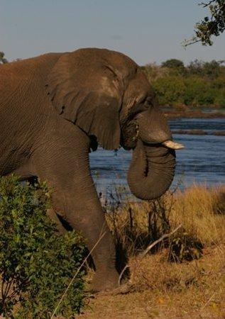 Victoria Falls (Mosi-oa-Tunya) National Park: having vegetarian breakfast...