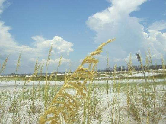 Sea Oats In The Dunes Near Santa Rosa Sound East Of