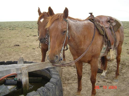Two Creek Ranch: Horses