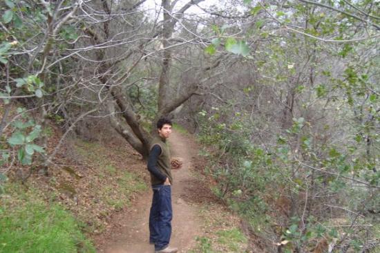Por una vereda, en busca del Pinus coulteri en Mt. Diablo (Mount Diablo). Dentro de la Black Dia