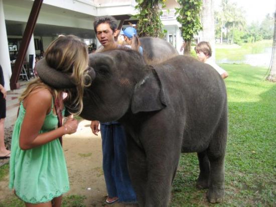 Angsana Laguna Phuket : elephant kiss