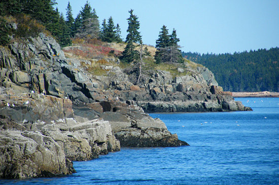 Acadian Nature Cruises: the rocky cliffs