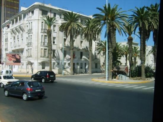 palm trees, Casablanca, Morocco