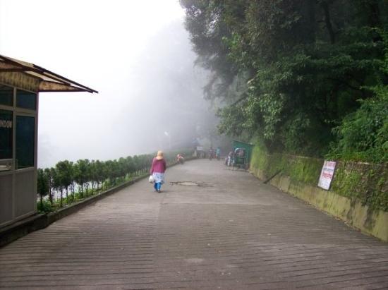 Company Garden : A misty walk in Mussorie