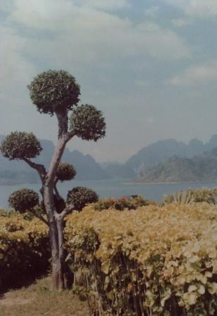 Ratchaprapah Dam, Surat Thani, Thailand