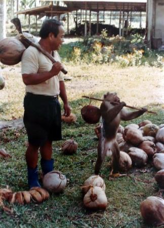 Surat Thani, Thailand: Surat Monkey School, Thailand