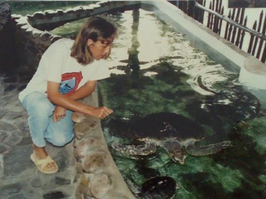 Tarutao National Marine Park: Turtle Nursery, Koh Tarutao, Thailand 2