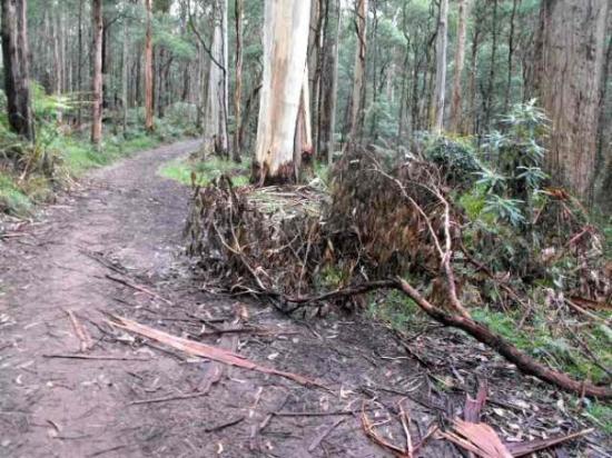 Olinda, Avustralya: Road 18, fallen trees