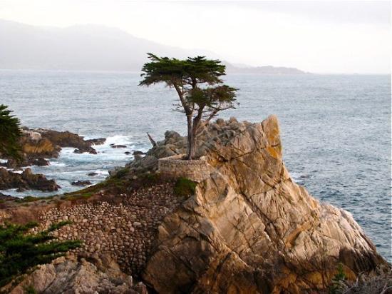 Pebble Beach The Legendary Lone Cypress