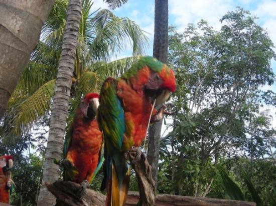 Zdjęcie Riviera Maya