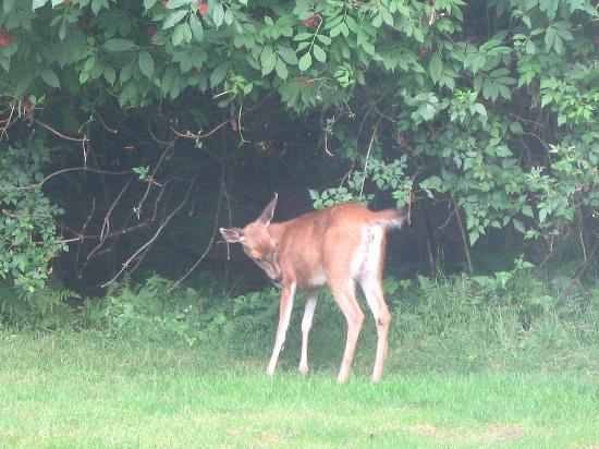 Cobble House Bed & Breakfast: Bambi