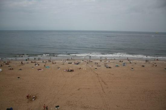 Seagulls From The Balcony Picture Of Virginia Beach