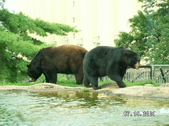 هوموود سويتس باي هيلتون هاريسبورج إيست: the Zoo
