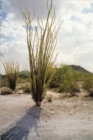 Phoenix, AZ: Arizona, multiple times